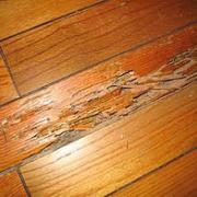 Example of Hardwood Floor Termite Damage Home Inspection Authority Southern California Residential & Commerical Inspections