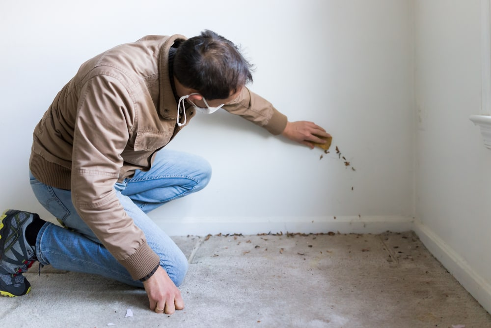 What Are The Signs Of Mold In Your House?