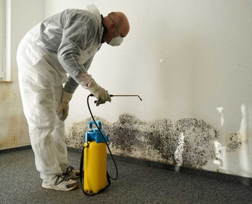 Rogue Inspection Services - Mold Testing