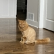 Frankie the Lion King by Endgame Home Inspection Services LLC