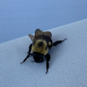 Lounging-Bee-by-endgame-home-inspection-services-llc-syracuse-ny
